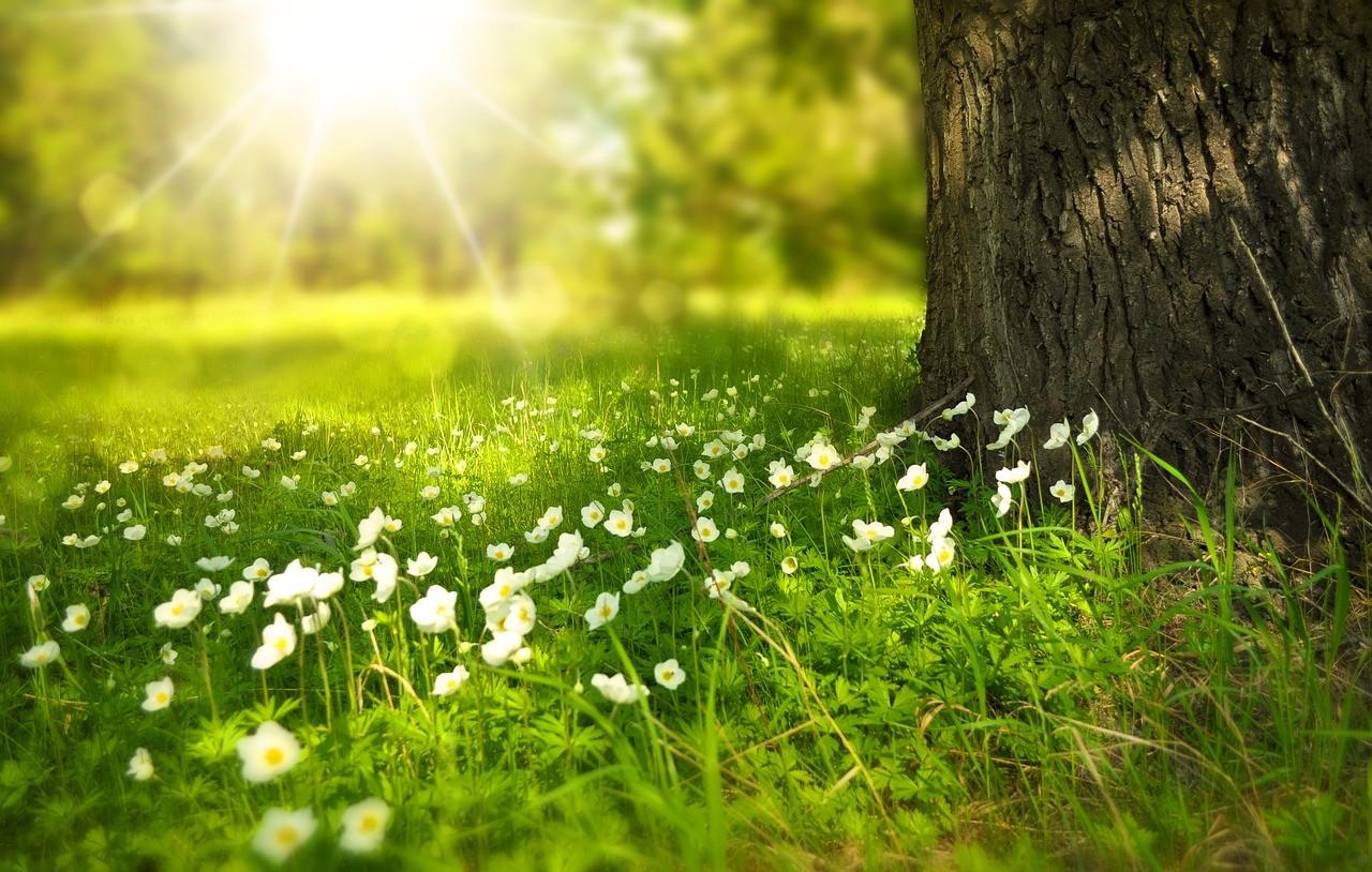 木々の間から漏れる太陽光