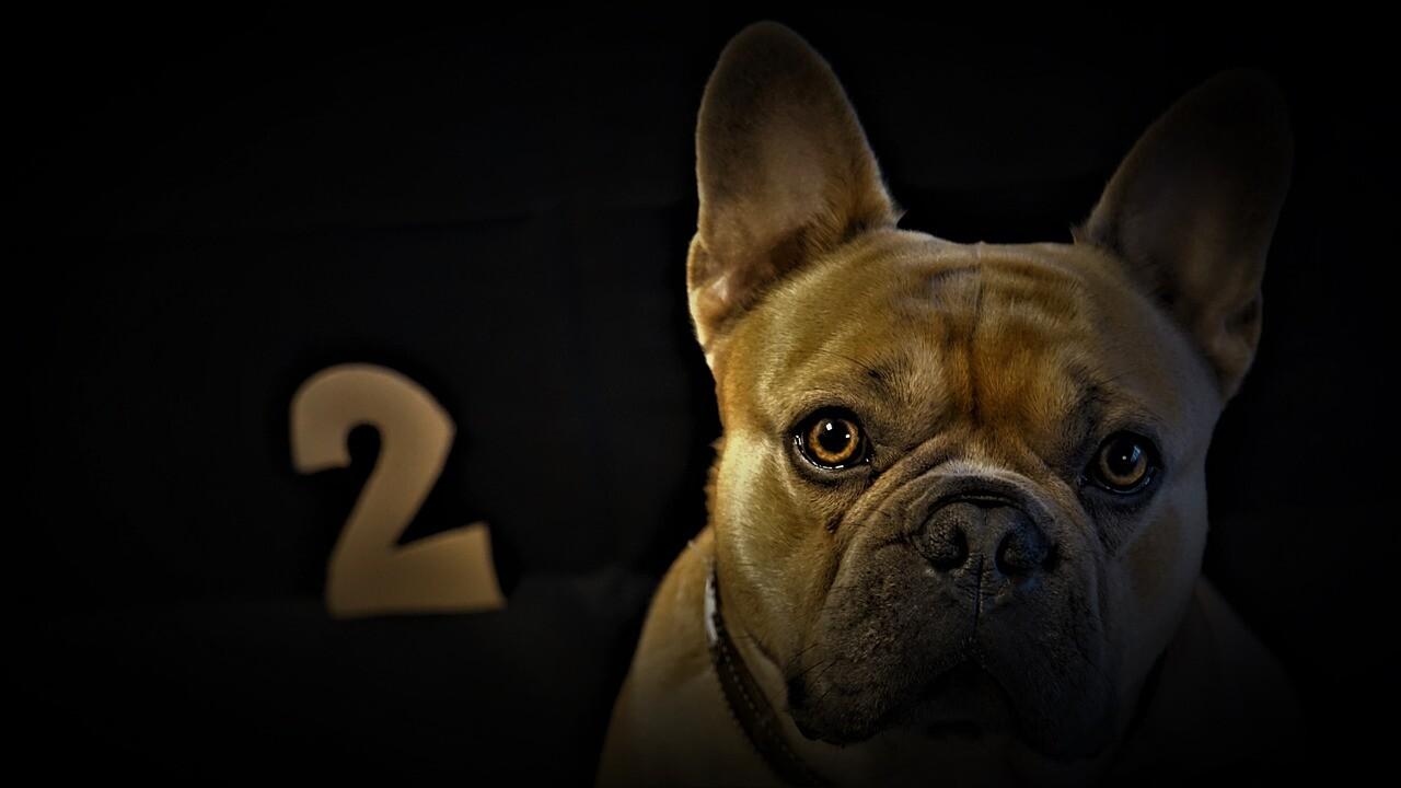2の文字と犬